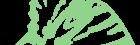 Polyommatus eros