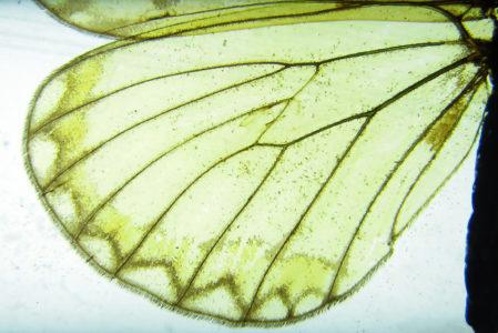 Le ali delle farfalle, meraviglia dell'evoluzione