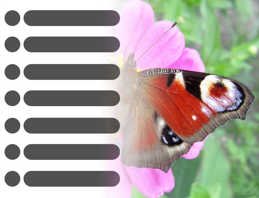Papilionea