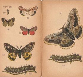Le tavole del Piccolo Atlante di Storia Naturale di U. Valbusa (1907)