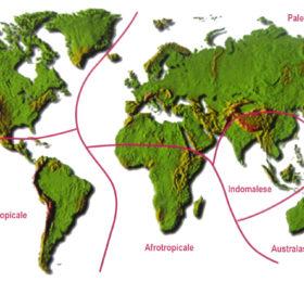 Universo dei Lepidotteri: Distribuzione delle farfalle ed Ecozone