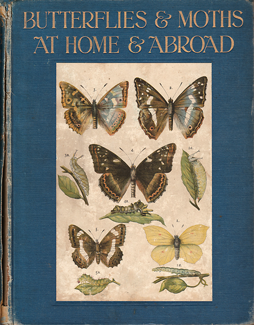 Butterflies and Moths at home and abroad