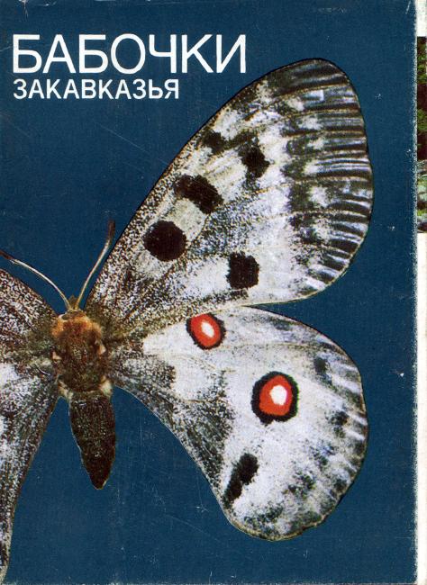 Бабочки Закавказья [Farfalle della Transcaucasia]